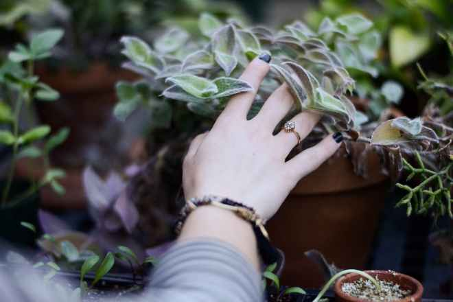 potted-plant-photo-blog-post