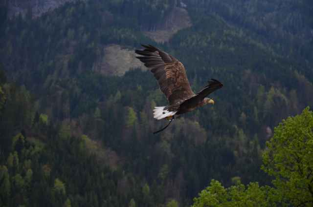 soaring-eagle-blog-pic