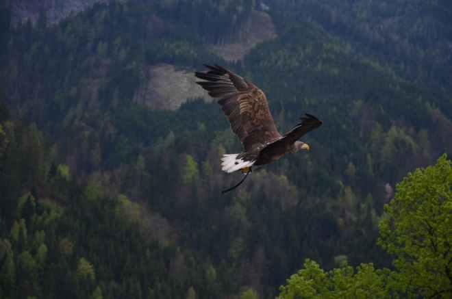 soaring-eagle-blog-pic
